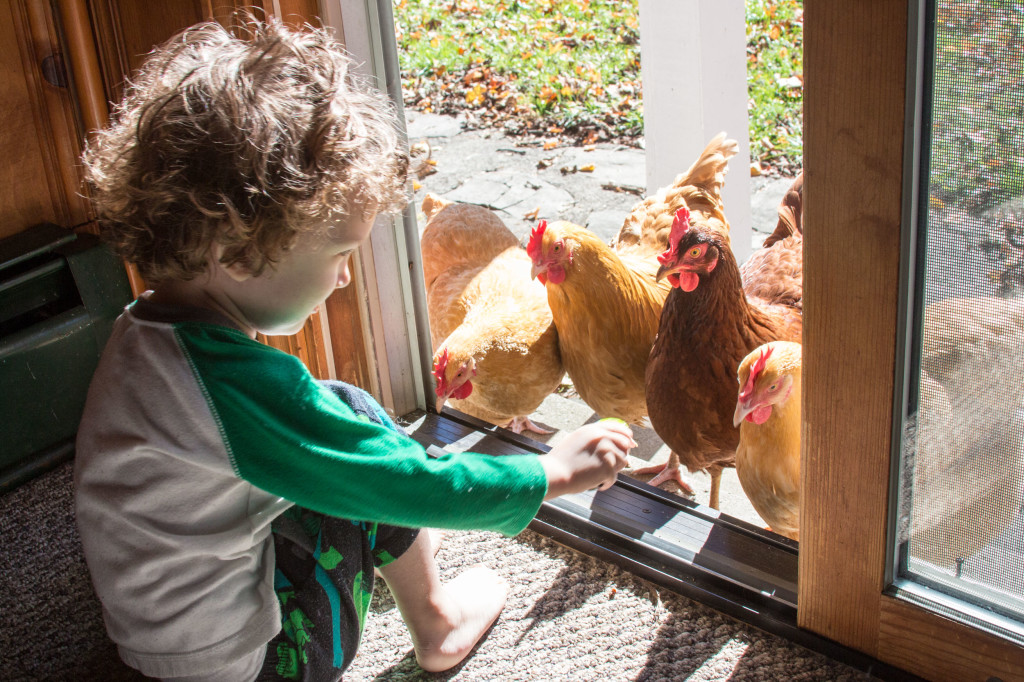 chickens-at-the-door-1