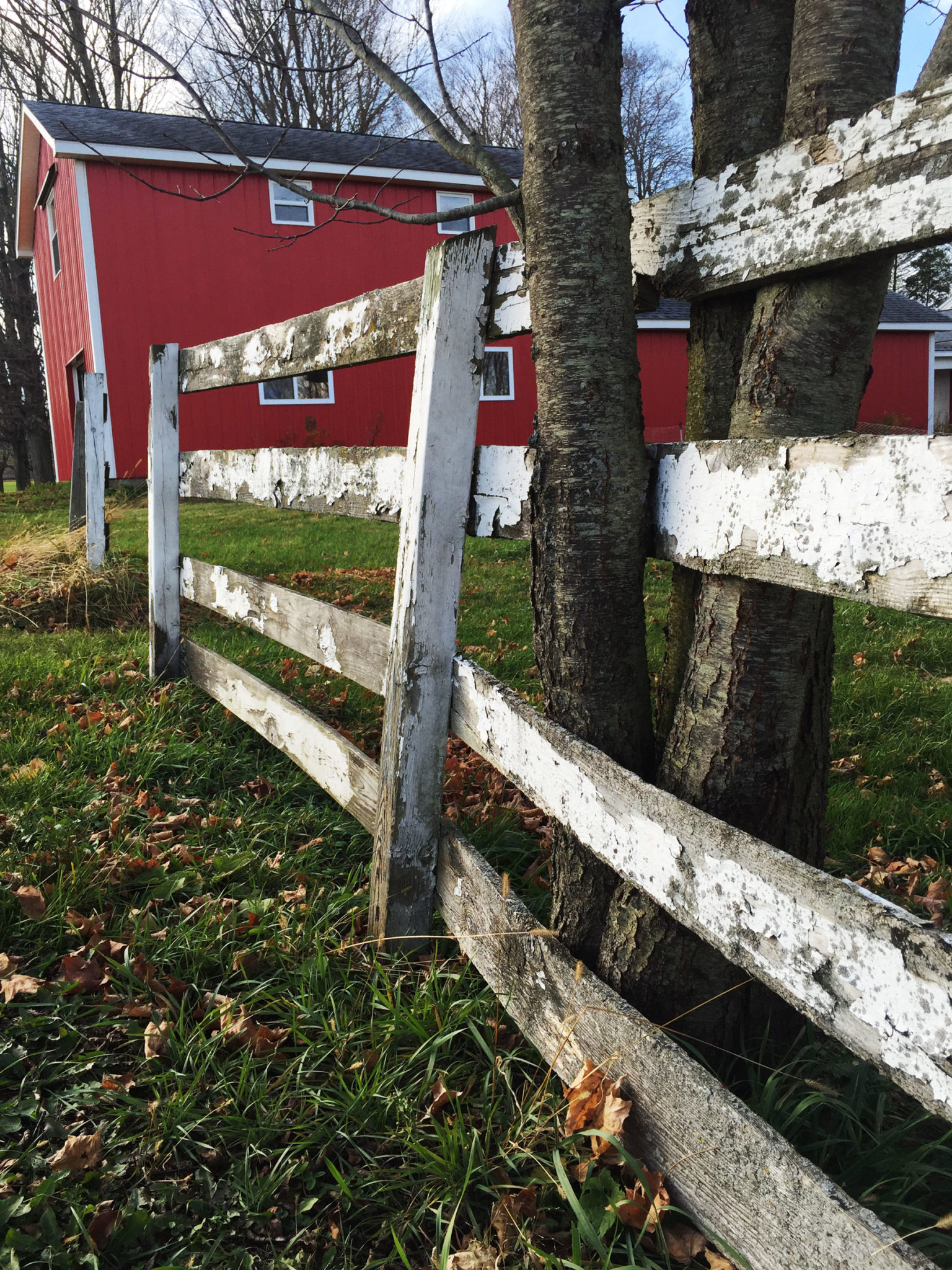 Barn and fence - Little Red Farmstead