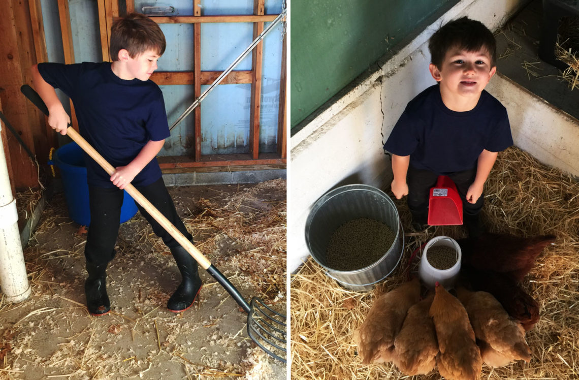 Ben's morning chores - Little Red Farmstead