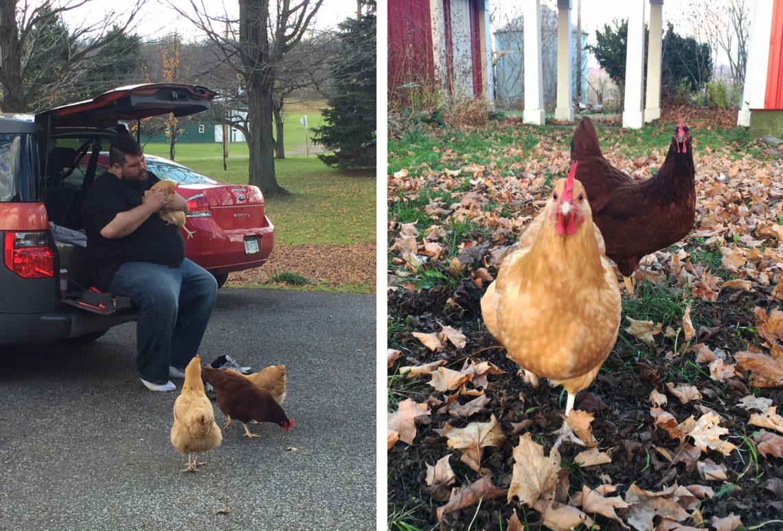 Chicken love! - Little Red Farmstead