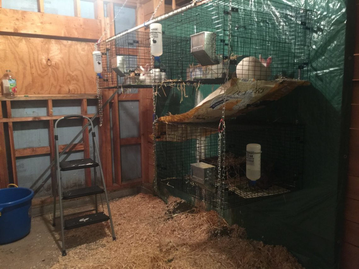 Rabbit cage setup - Little Red Farmstead