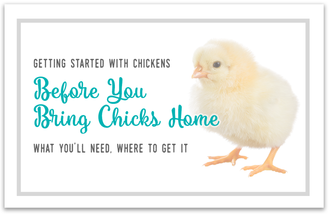 Before You Bring Home Chicks - What You'll Need - Little Red Farmstead