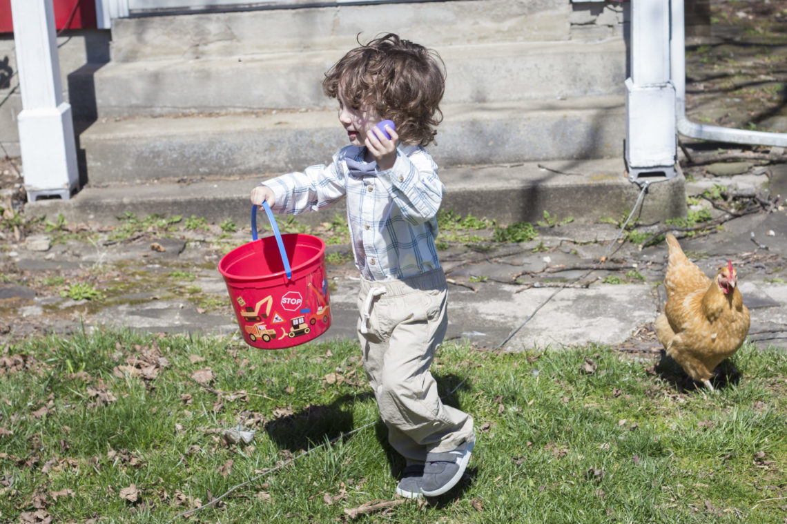 Myles collecting eggs - Photo by Erica Bickel | Little Red Farmstead