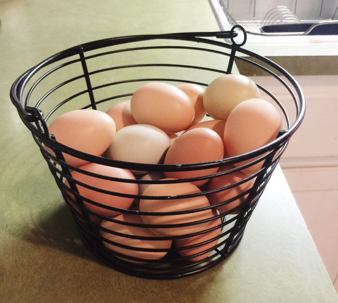 Lots-o-eggs | Little Red Farmstead