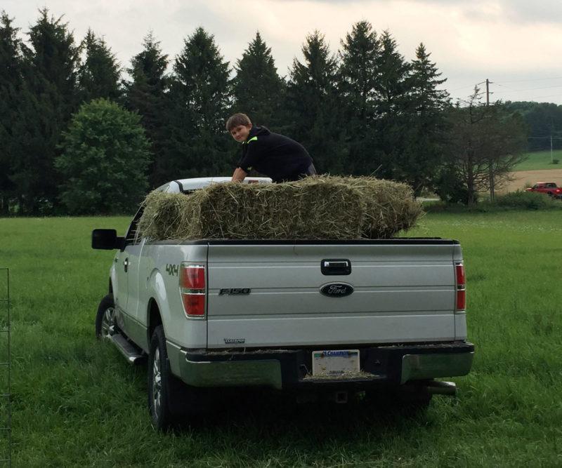 Ben unloading hay