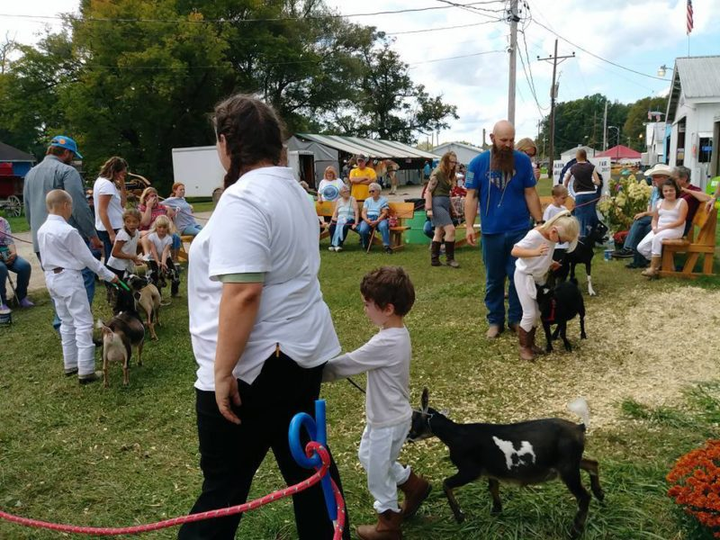 Myles showing Maizey, Albion Fair 2017
