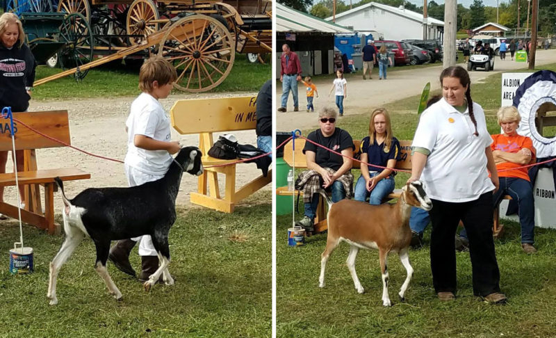 Ben showing Misty, Amanda showing Luna at the Albion Fair, 2017