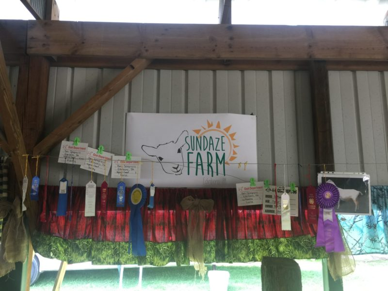 Sundaze Farm stall and ribbons at the Albion Fair, 2017